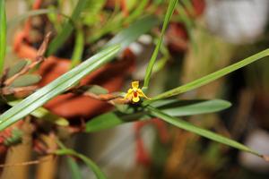 орхидея после цветения уход в домашних условиях видео
